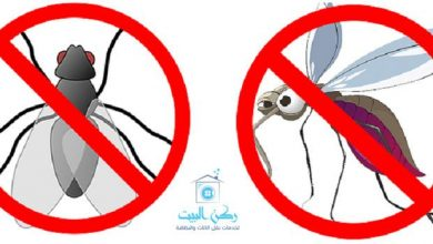 عشر وصفات للتخلص من الذباب