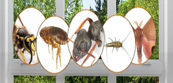 التخلص من الحشرات بطرق طبيعية