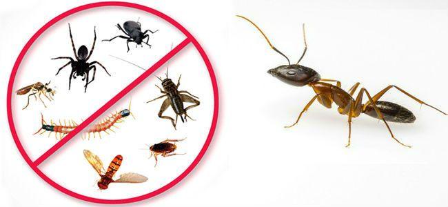 عشر نصائح للتخلص من النمل